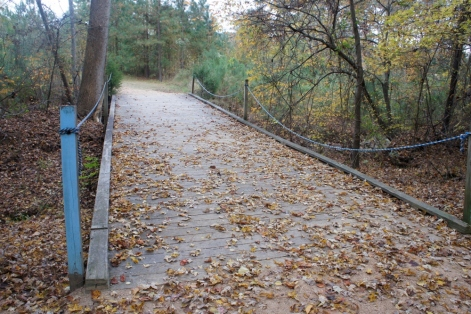 Fall 2014: I saw this trail many times with Steve.